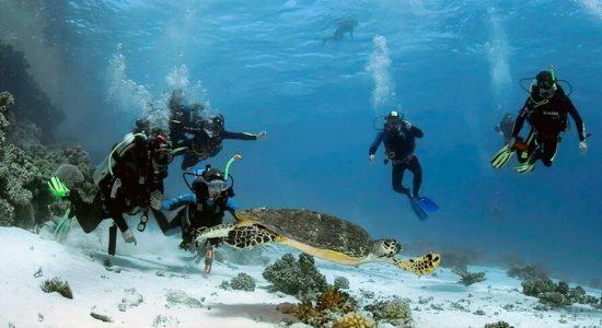 Подводный мир Шарм Эль Шейх